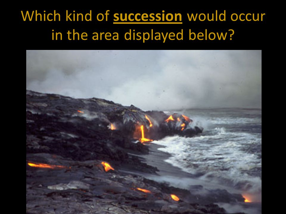 Which kind of succession would occur in the area displayed below