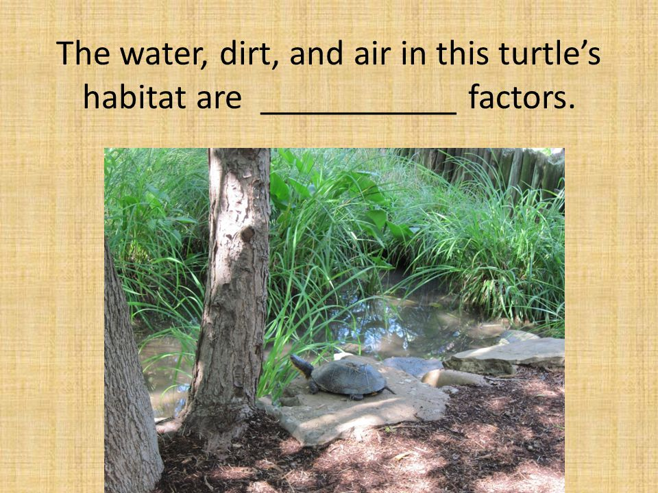 The water, dirt, and air in this turtle's habitat are ___________ factors.
