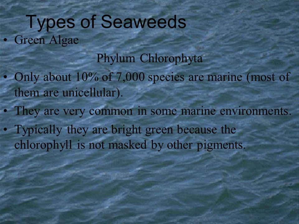 Types of Seaweeds Green Algae Phylum Chlorophyta
