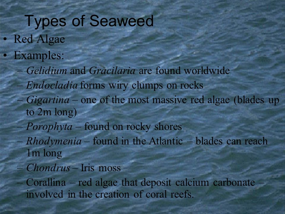 Types of Seaweed Red Algae Examples: