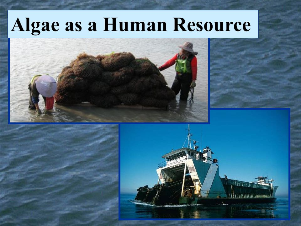 Algae as a Human Resource