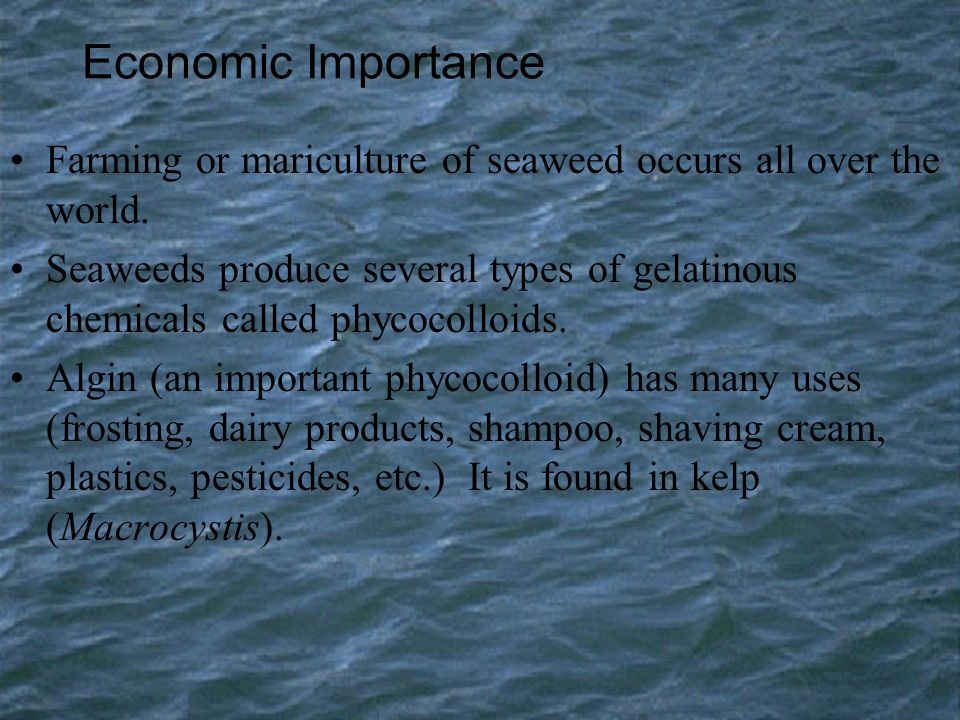 Economic Importance Farming or mariculture of seaweed occurs all over the world.