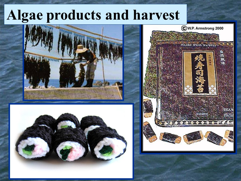 Algae products and harvest
