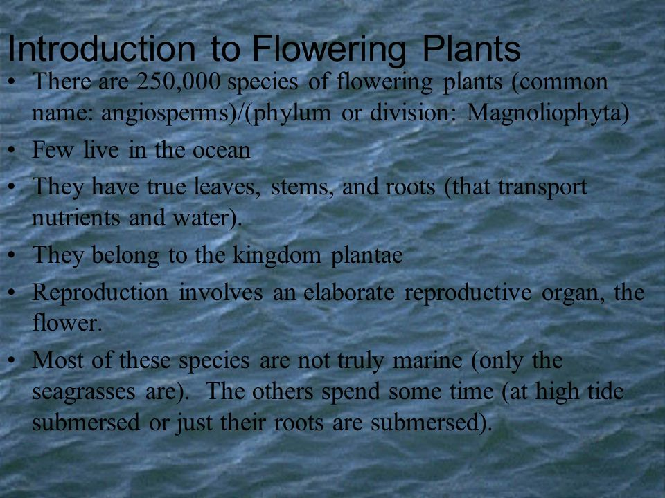 Introduction to Flowering Plants