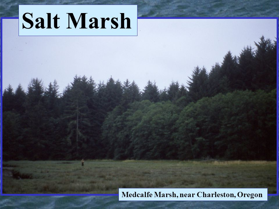 Salt Marsh Medcalfe Marsh, near Charleston, Oregon