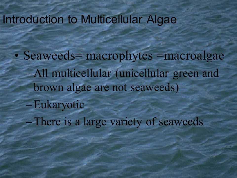 Introduction to Multicellular Algae