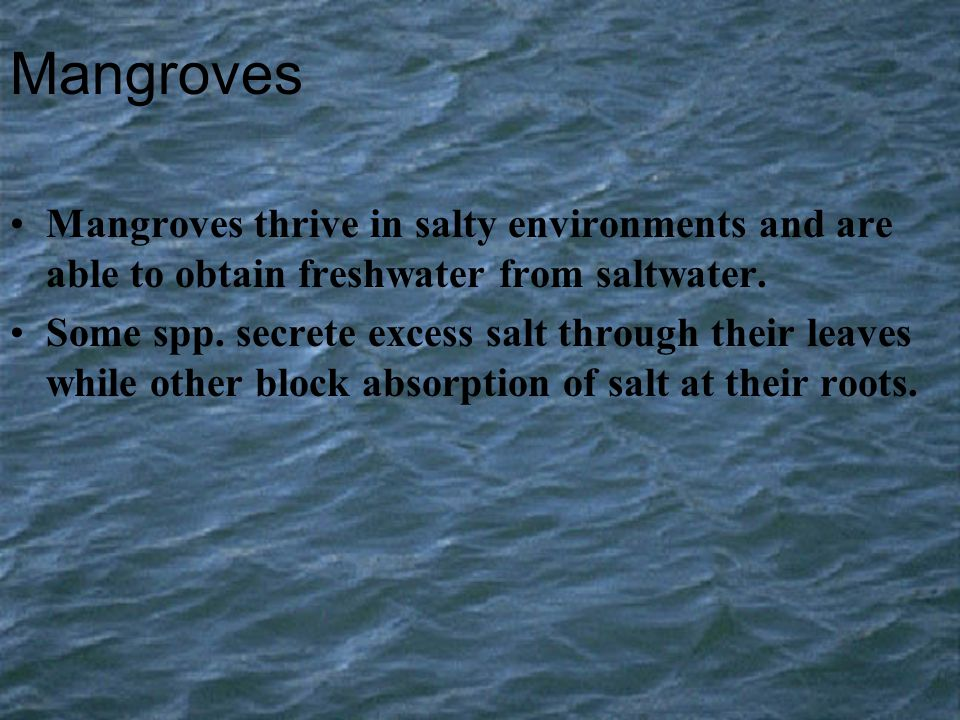 Mangroves Mangroves thrive in salty environments and are able to obtain freshwater from saltwater.