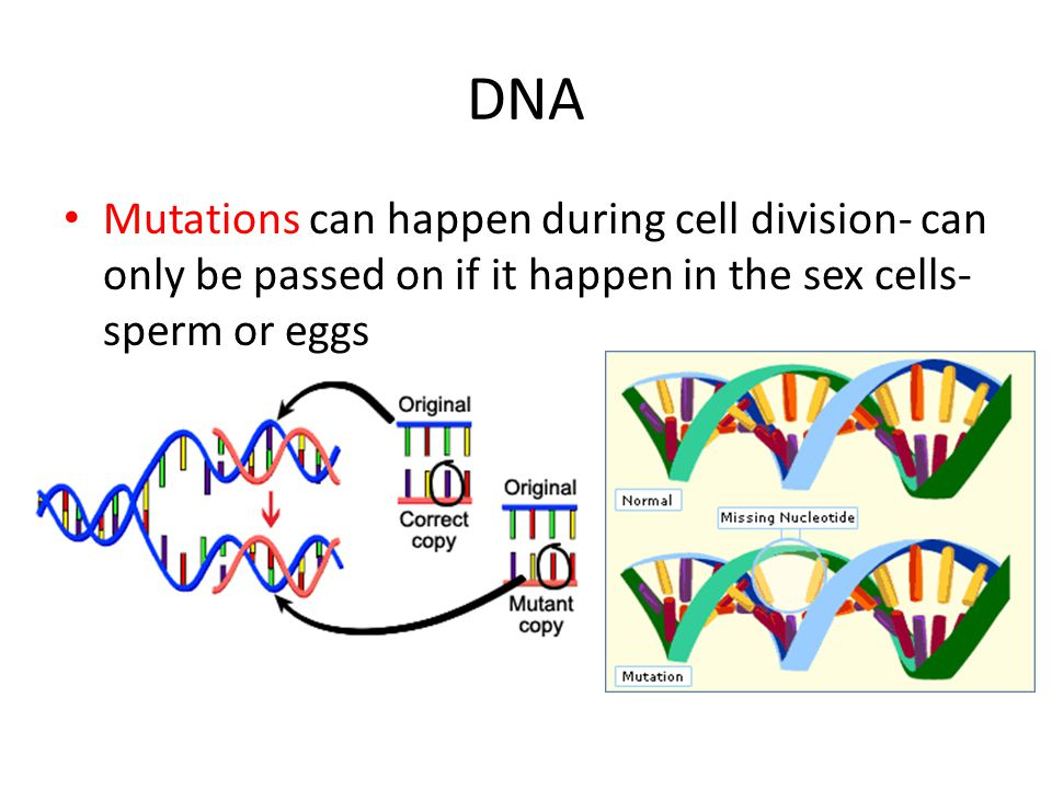 DNA Mutations can happen during cell division- can only be passed on if it happen in the sex cells- sperm or eggs.