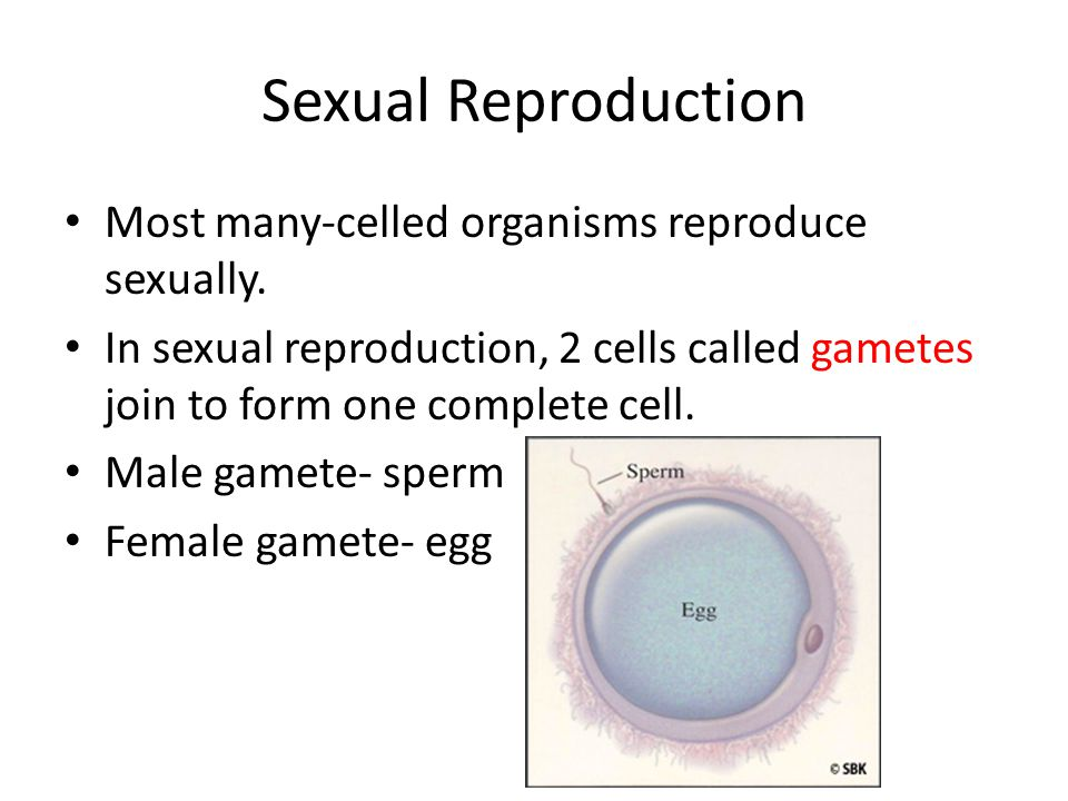 Sexual Reproduction Most many-celled organisms reproduce sexually.
