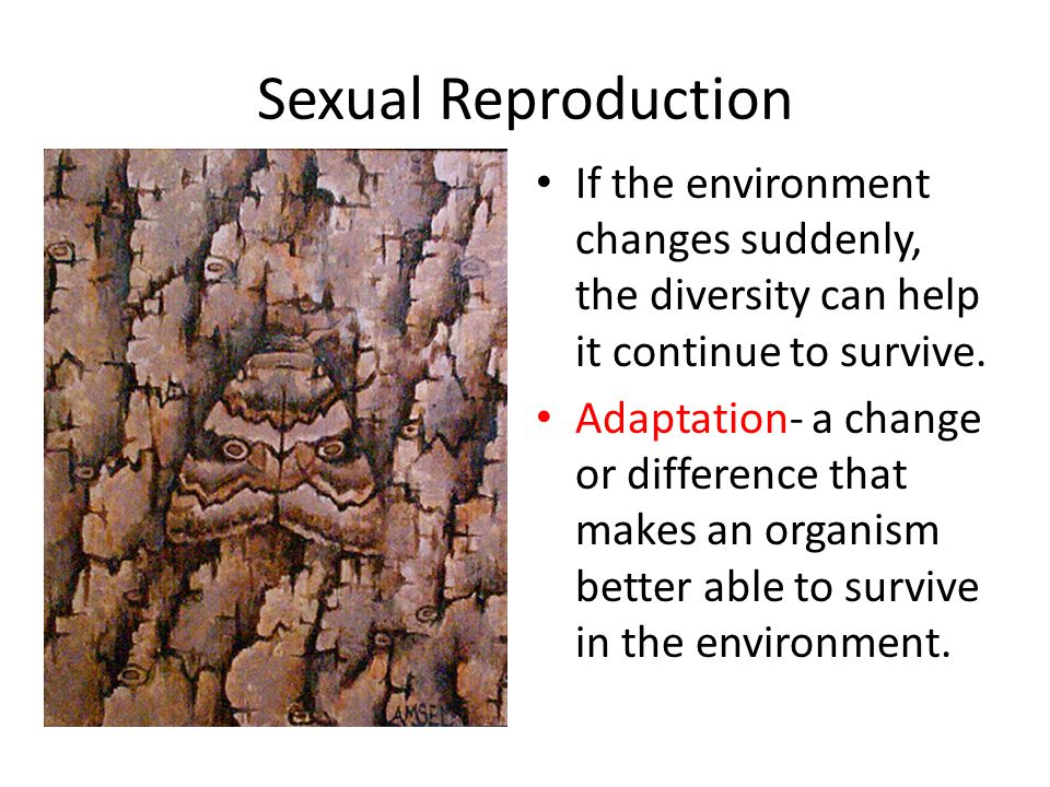 Sexual Reproduction If the environment changes suddenly, the diversity can help it continue to survive.