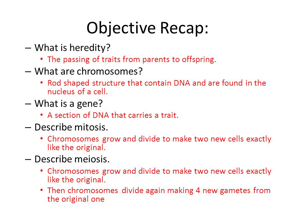 Objective Recap: What is heredity What are chromosomes