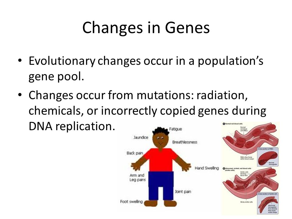 Changes in Genes Evolutionary changes occur in a population's gene pool.