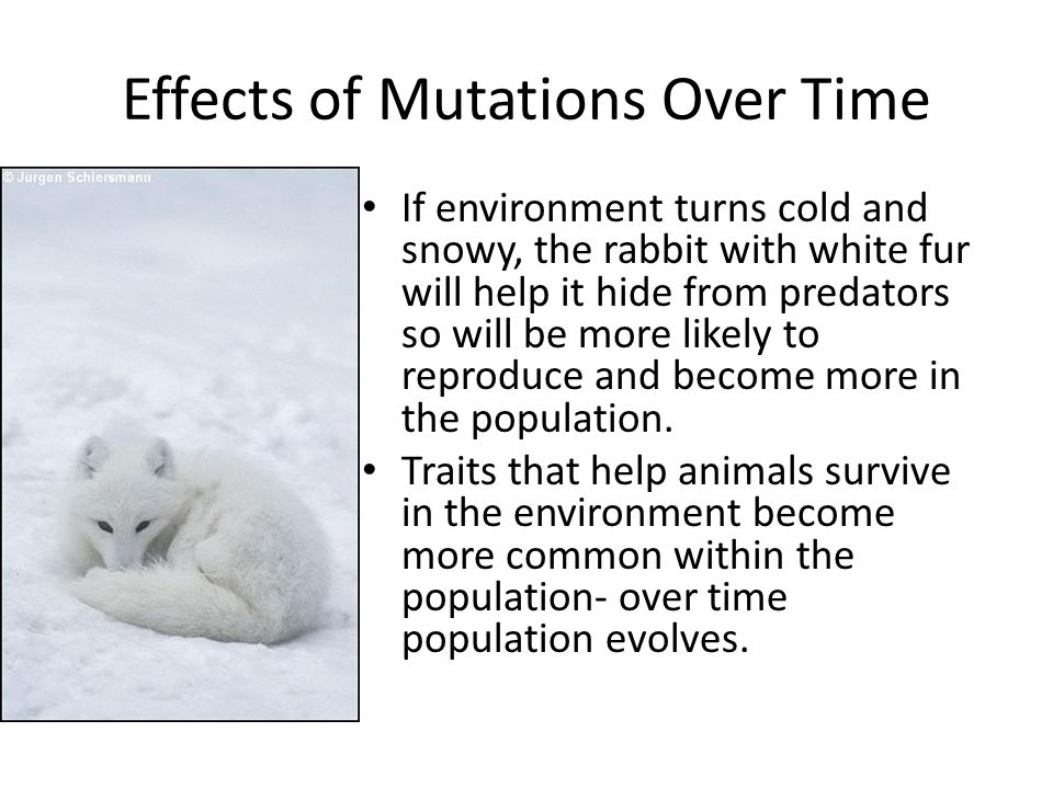 Effects of Mutations Over Time