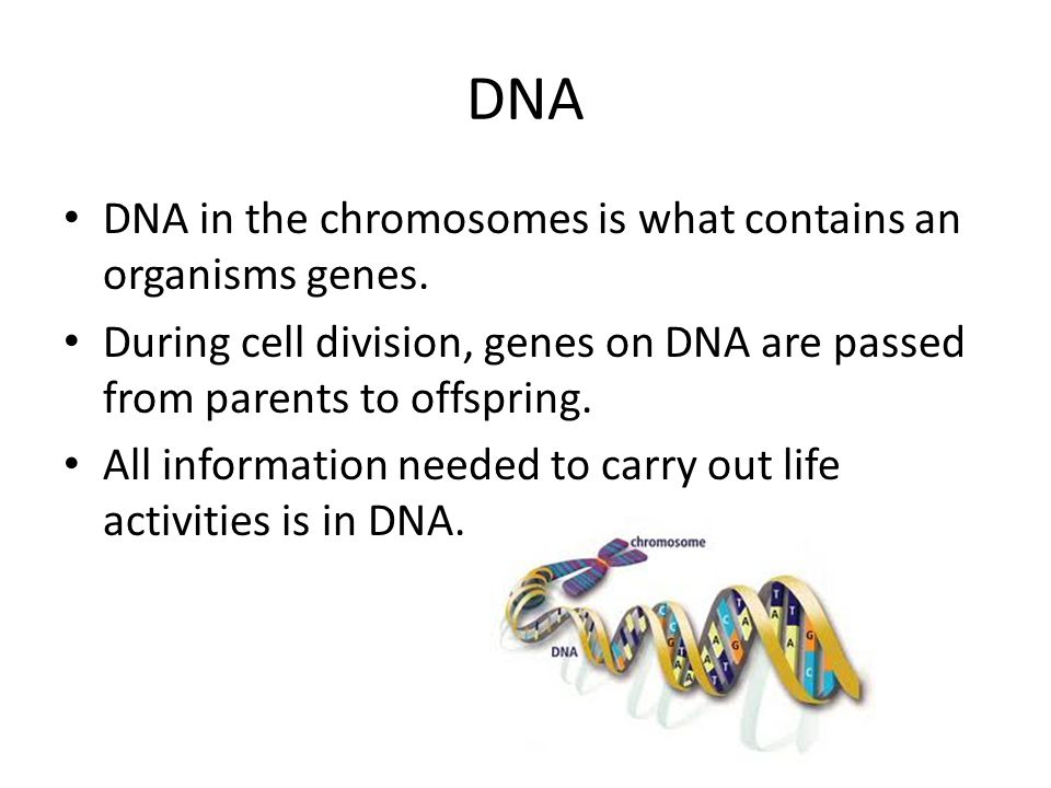 DNA DNA in the chromosomes is what contains an organisms genes.