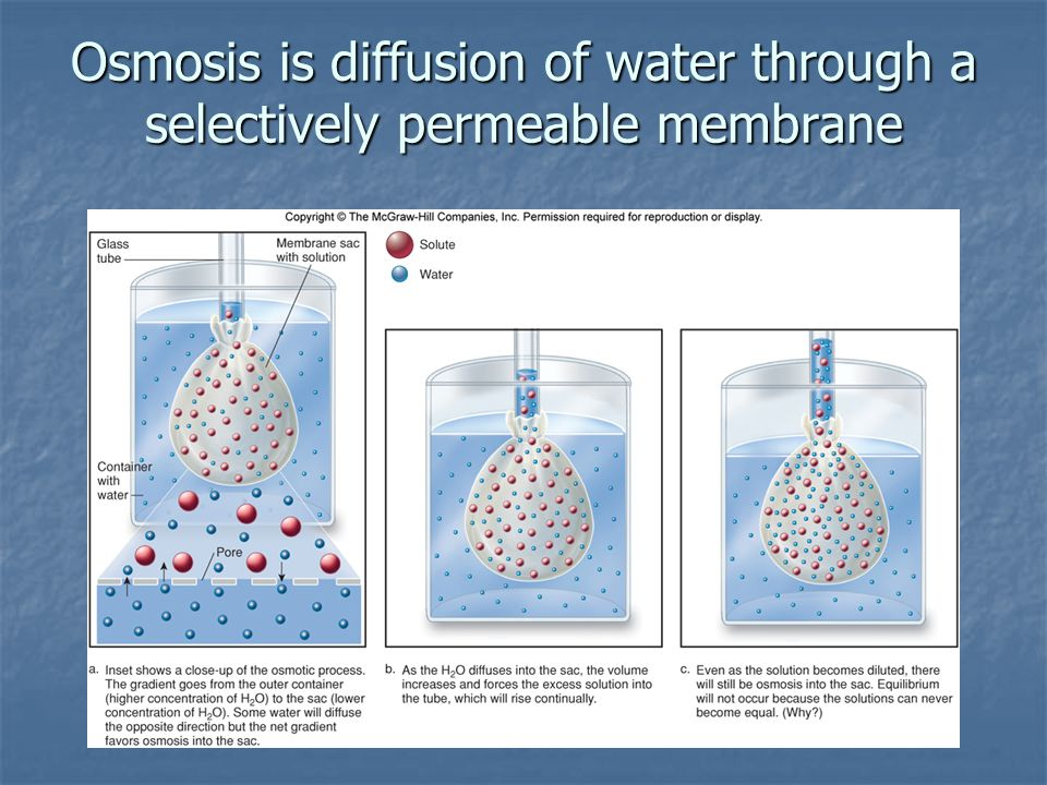 Osmosis is diffusion of water through a selectively permeable membrane
