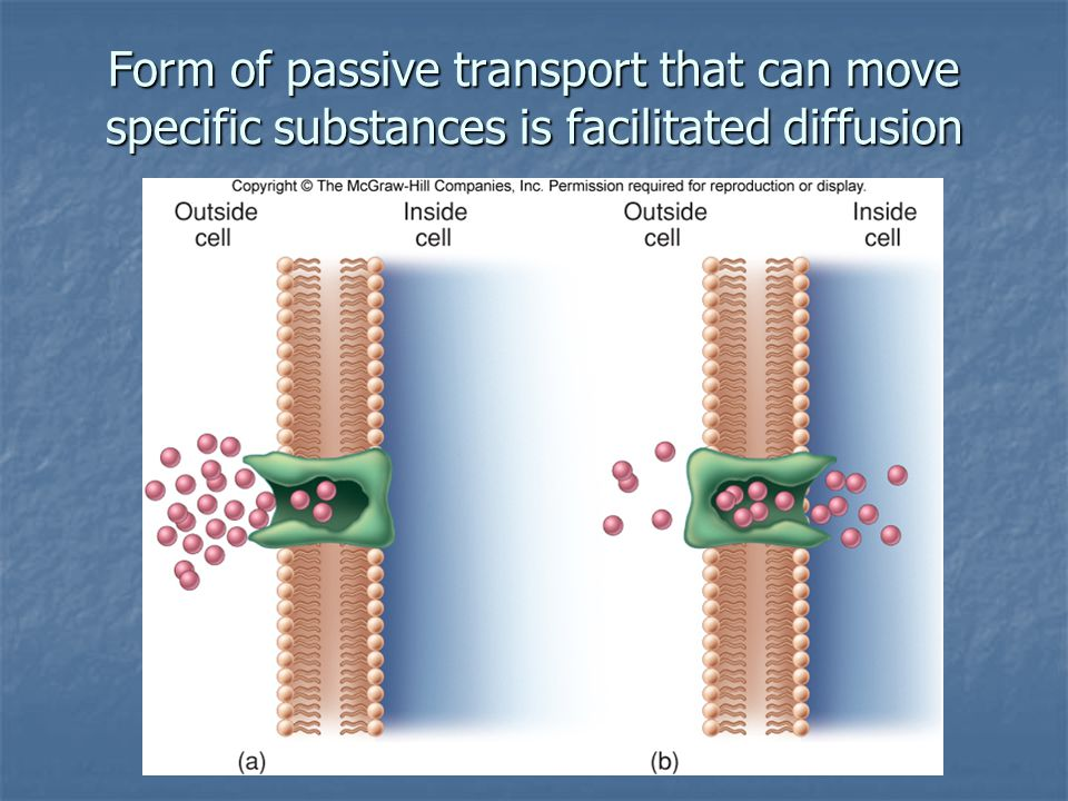 Form of passive transport that can move specific substances is facilitated diffusion