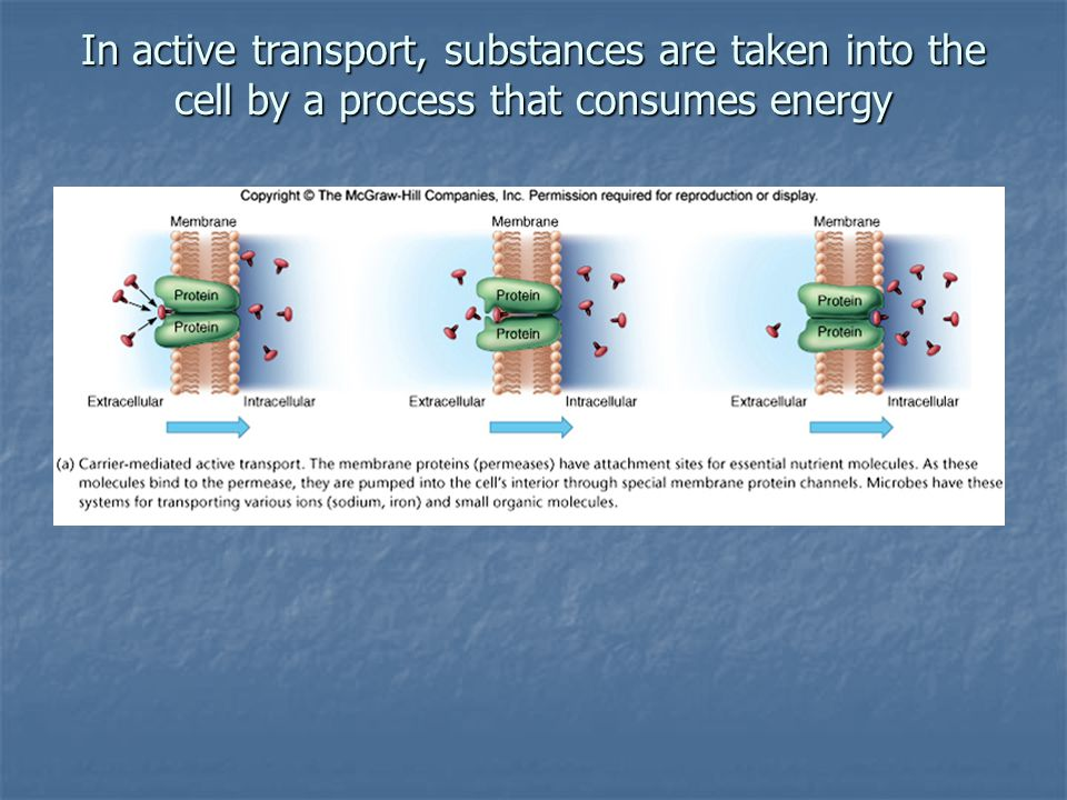 In active transport, substances are taken into the cell by a process that consumes energy