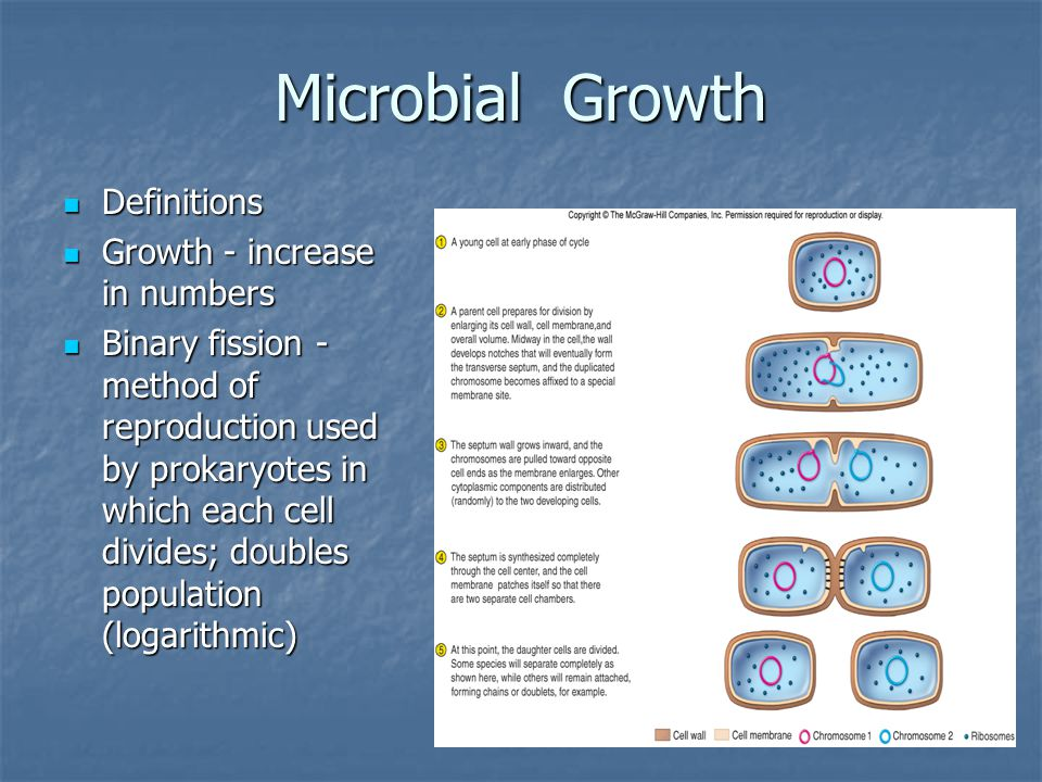 Microbial Growth Definitions Growth - increase in numbers
