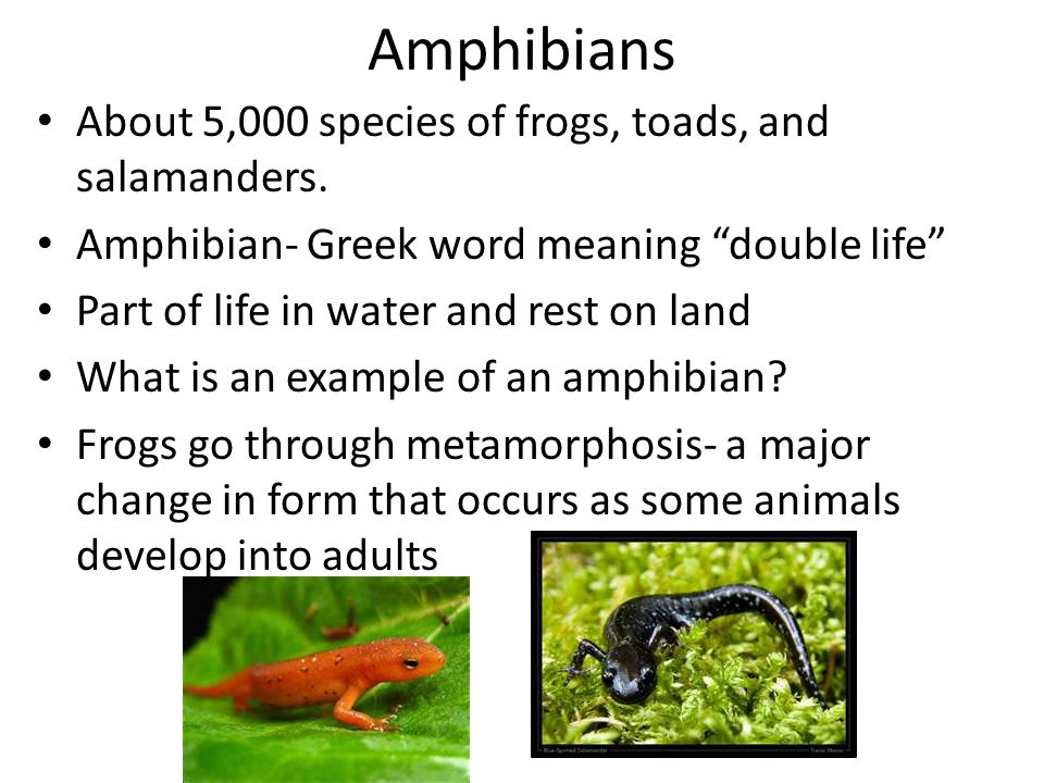 Amphibians About 5,000 species of frogs, toads, and salamanders.