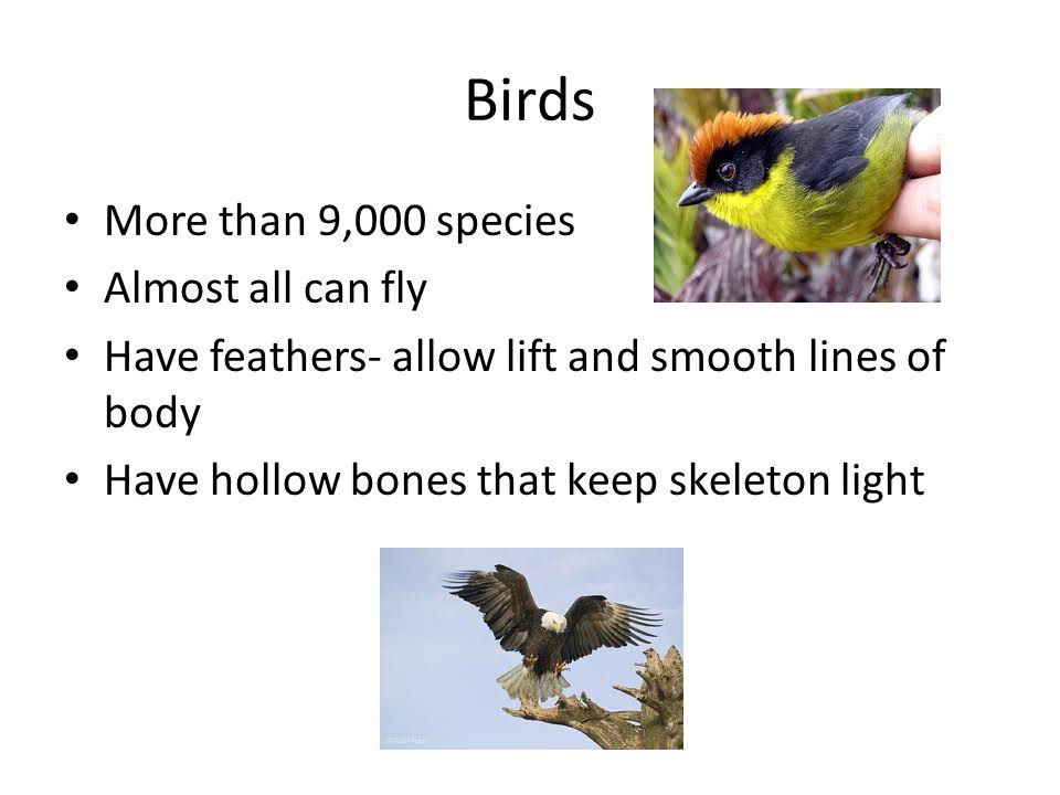 Birds More than 9,000 species Almost all can fly