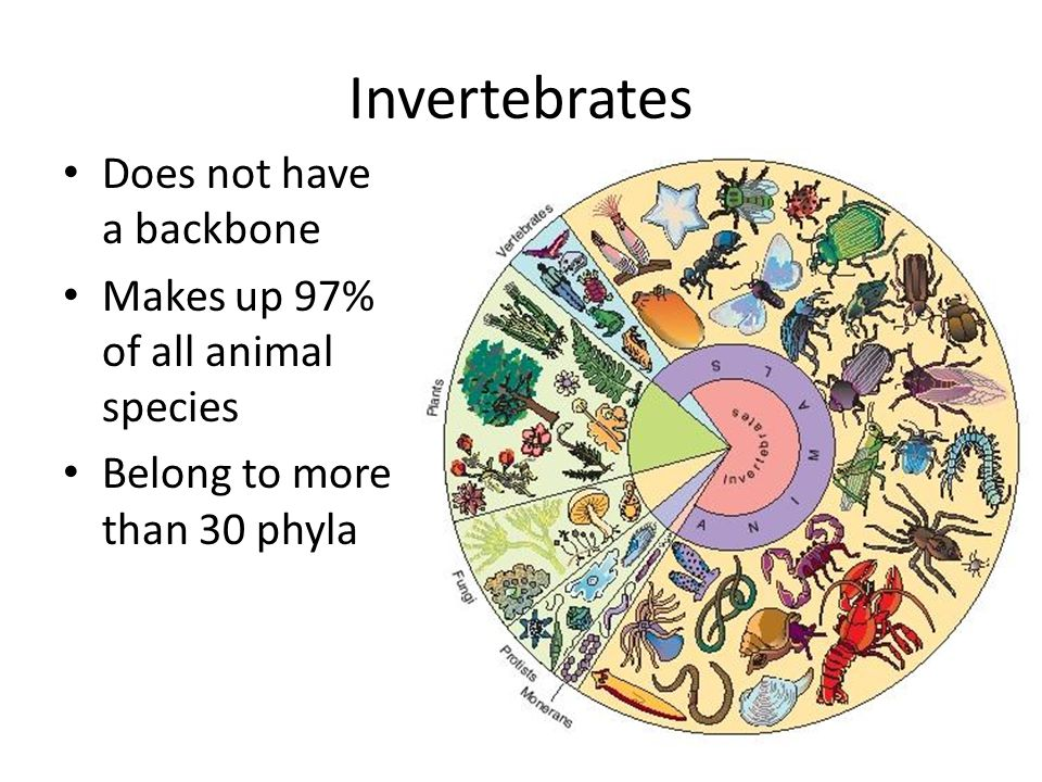 Invertebrates Does not have a backbone