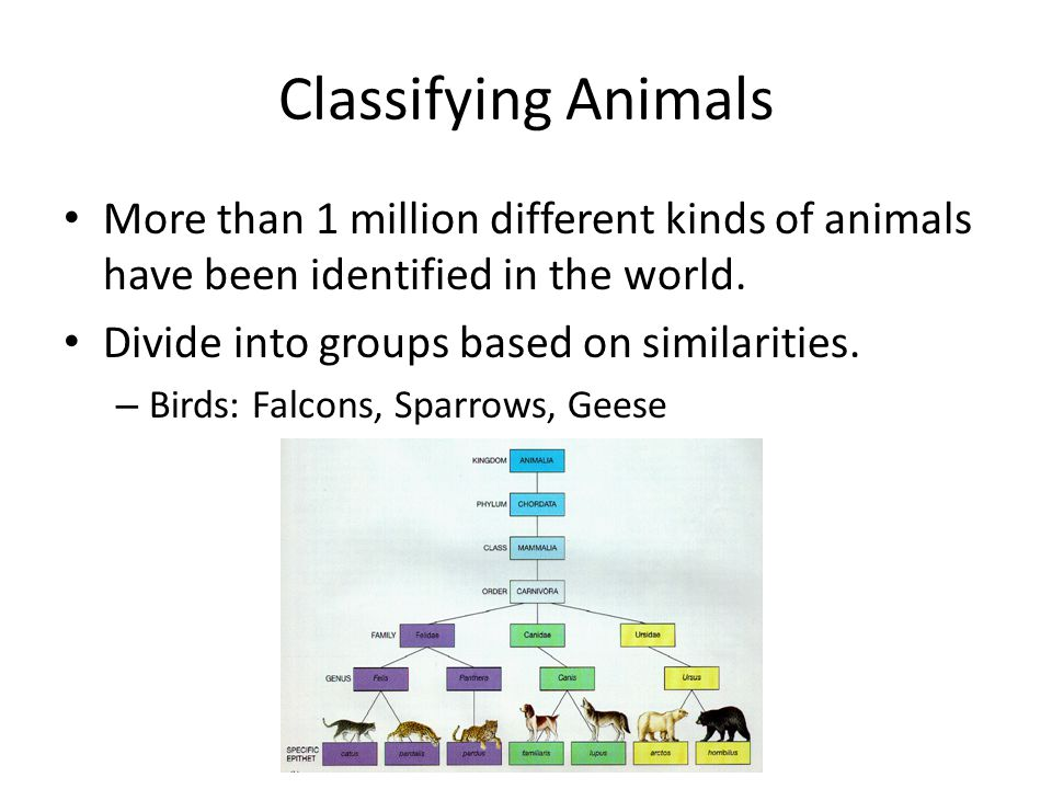 Classifying Animals More than 1 million different kinds of animals have been identified in the world.