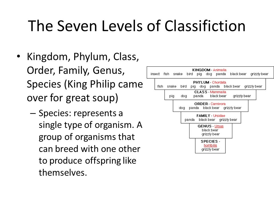 The Seven Levels of Classifiction