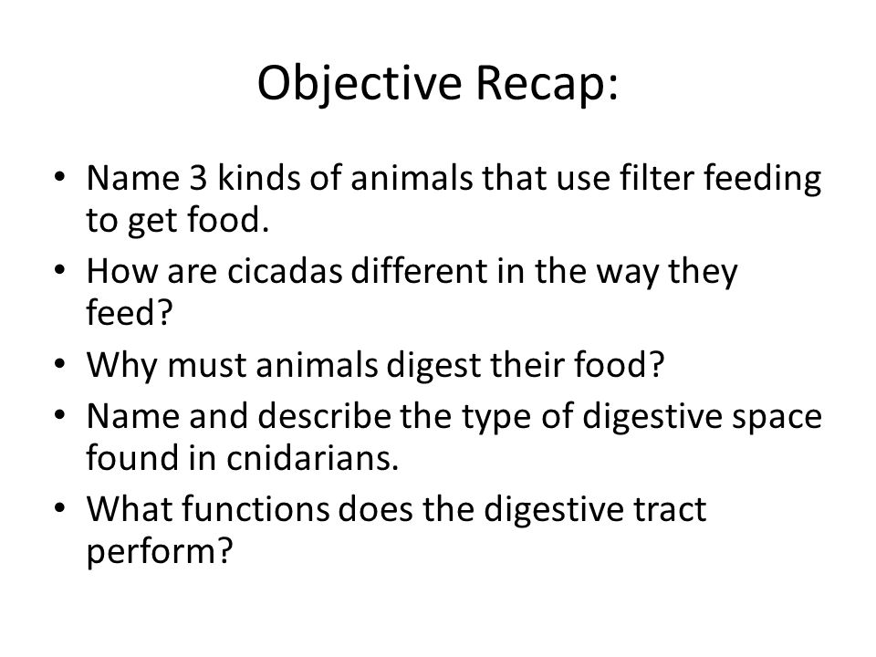 Objective Recap: Name 3 kinds of animals that use filter feeding to get food. How are cicadas different in the way they feed