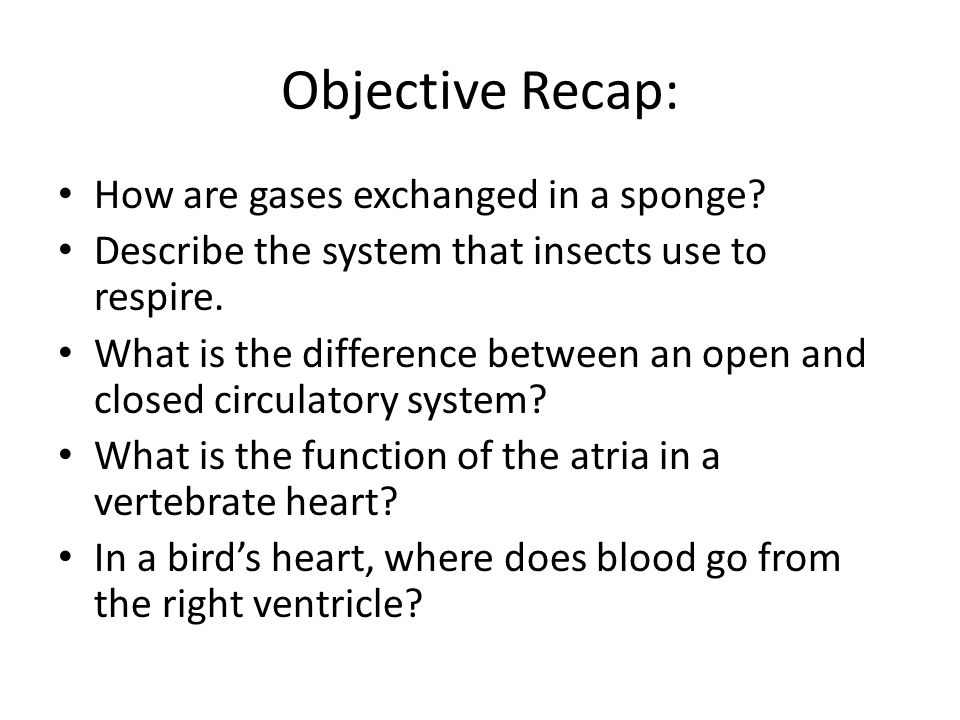 Objective Recap: How are gases exchanged in a sponge