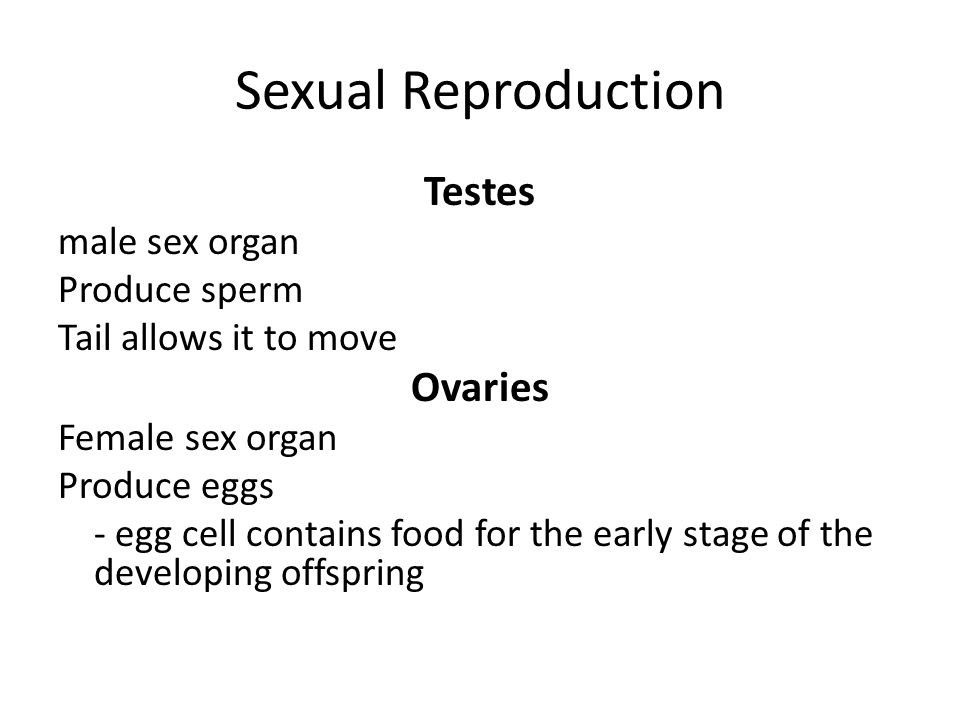 Sexual Reproduction Testes Ovaries male sex organ Produce sperm