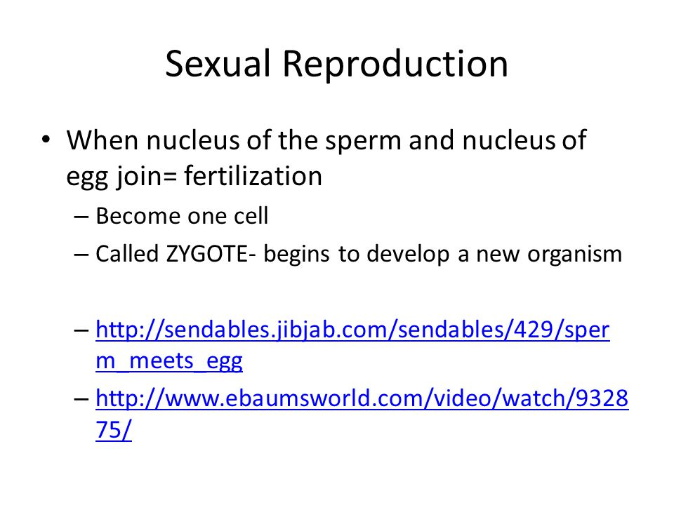 Sexual Reproduction When nucleus of the sperm and nucleus of egg join= fertilization. Become one cell.