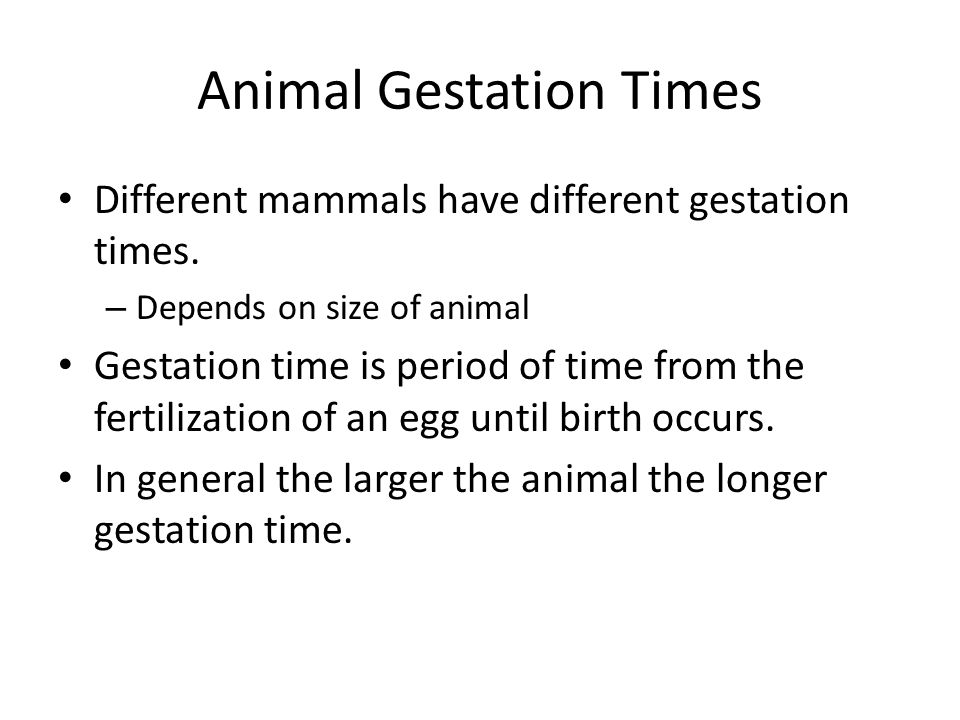 Animal Gestation Times
