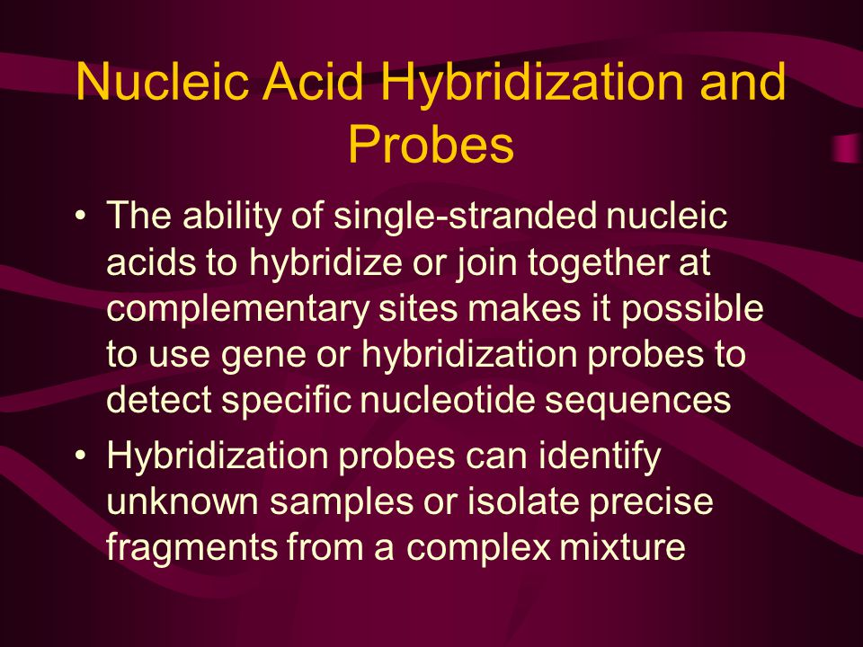 Nucleic Acid Hybridization and Probes