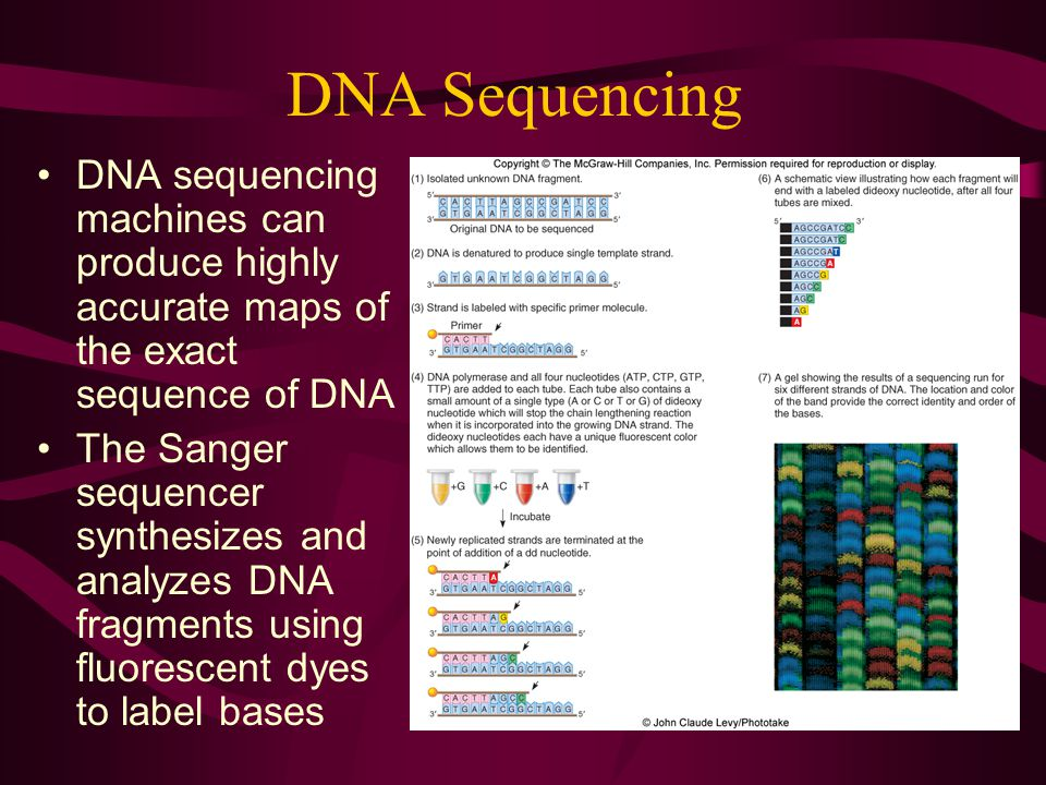 DNA Sequencing DNA sequencing machines can produce highly accurate maps of the exact sequence of DNA.