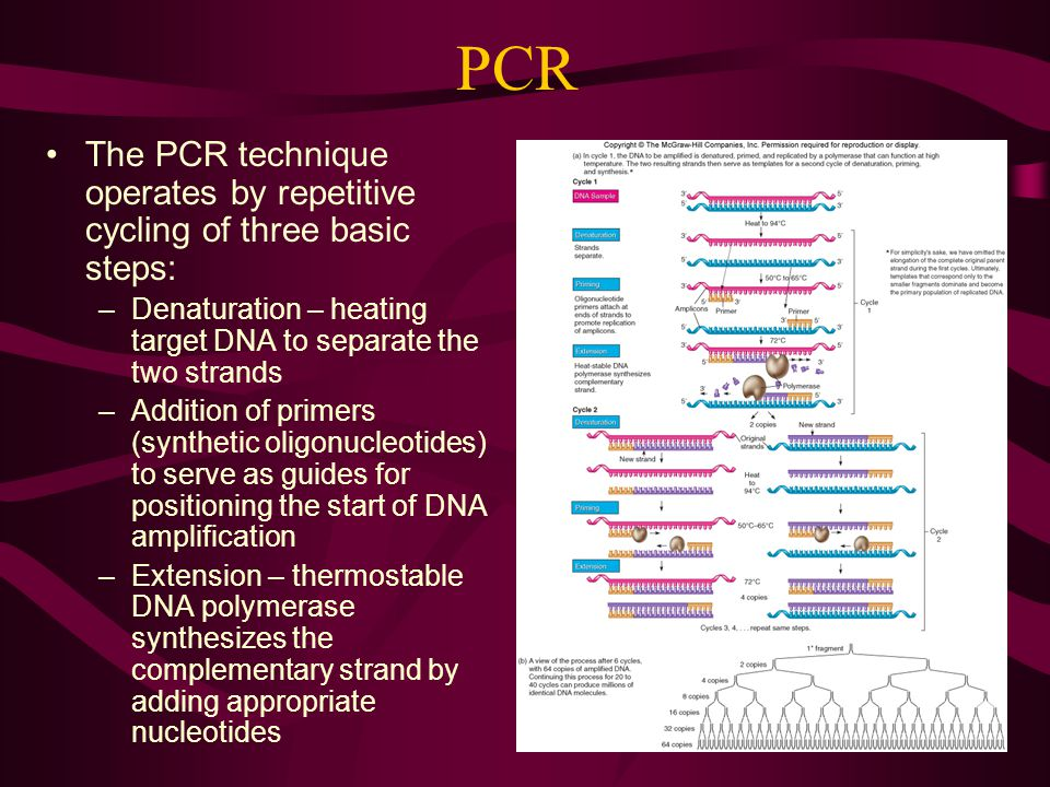 PCR The PCR technique operates by repetitive cycling of three basic steps: Denaturation – heating target DNA to separate the two strands.
