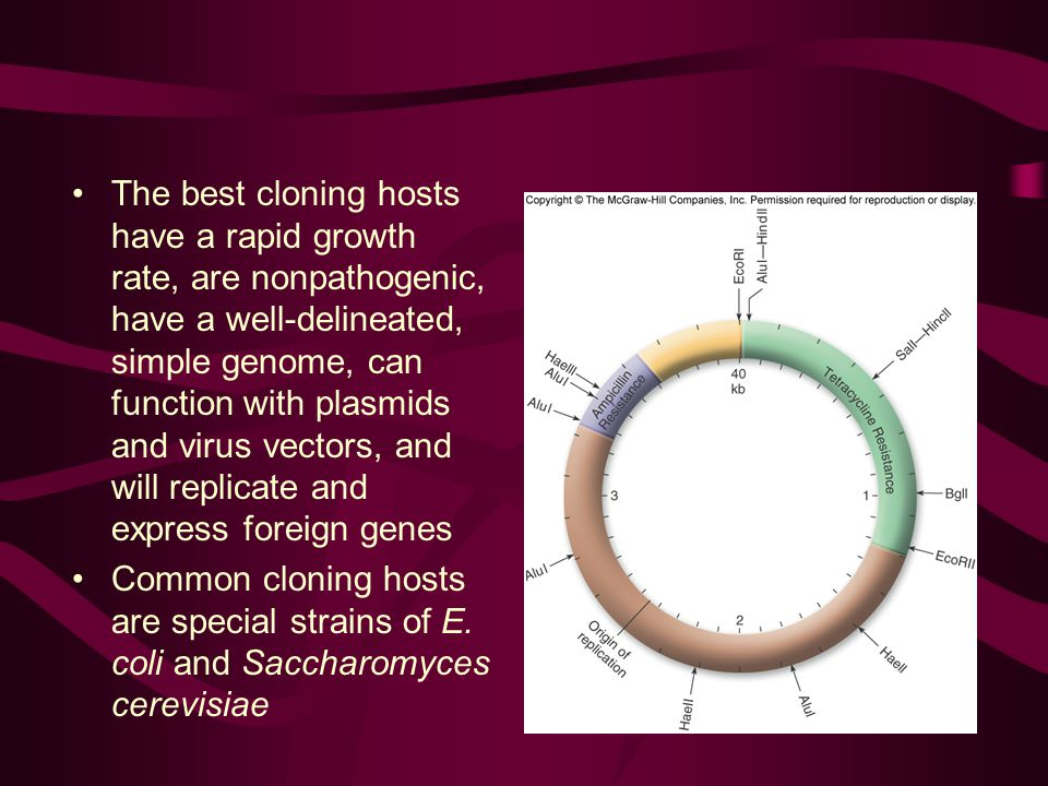 The best cloning hosts have a rapid growth rate, are nonpathogenic, have a well-delineated, simple genome, can function with plasmids and virus vectors, and will replicate and express foreign genes