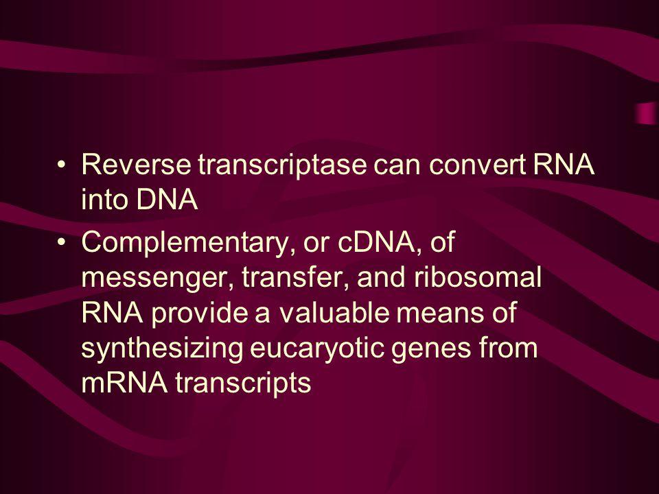 Reverse transcriptase can convert RNA into DNA
