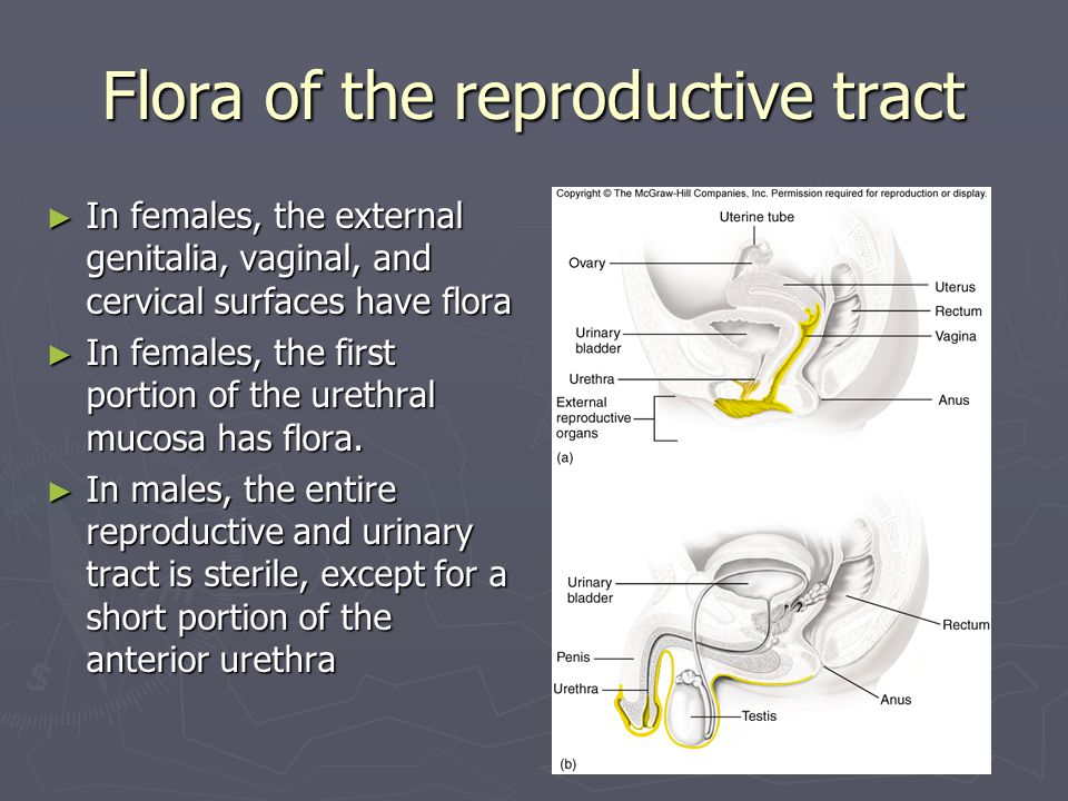Flora of the reproductive tract