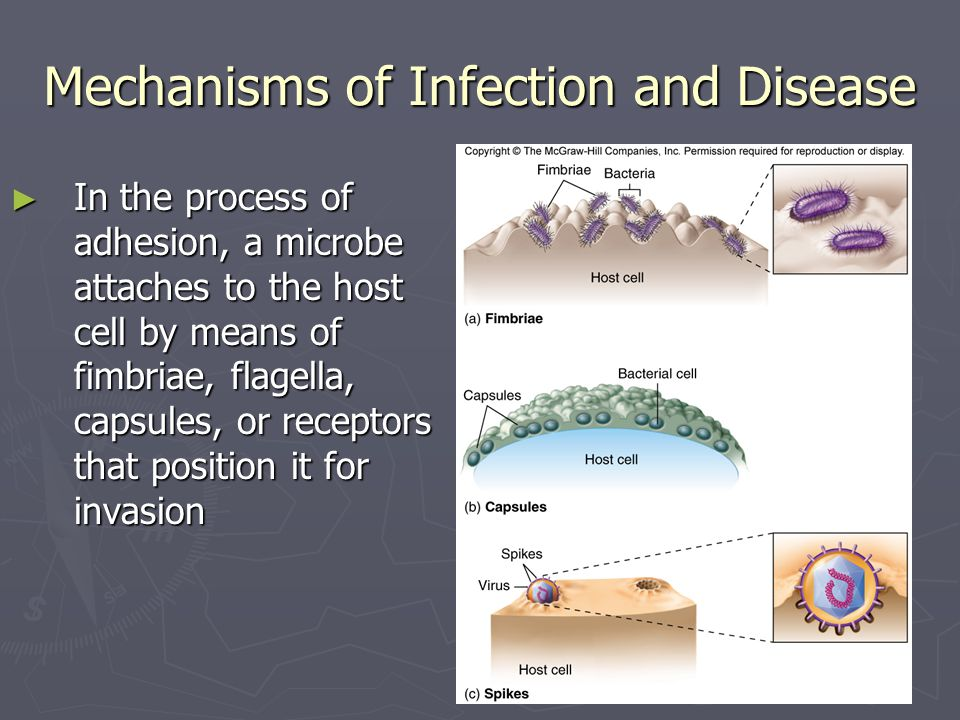 Mechanisms of Infection and Disease