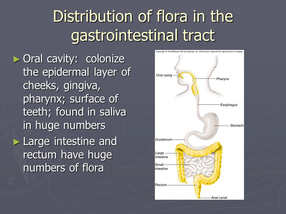 Distribution of flora in the gastrointestinal tract