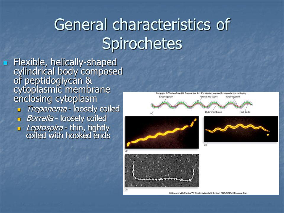 General characteristics of Spirochetes