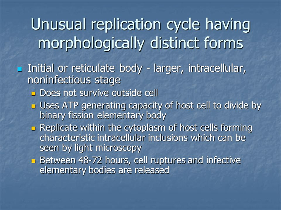 Unusual replication cycle having morphologically distinct forms