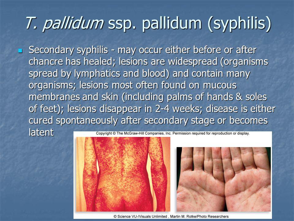 T. pallidum ssp. pallidum (syphilis)