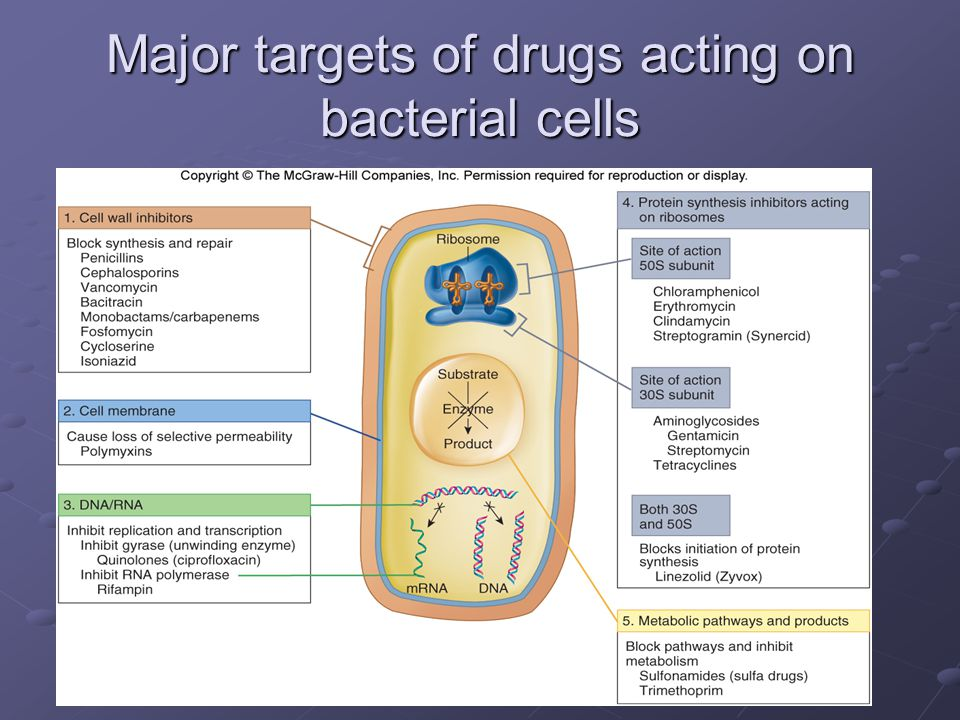 Major targets of drugs acting on bacterial cells