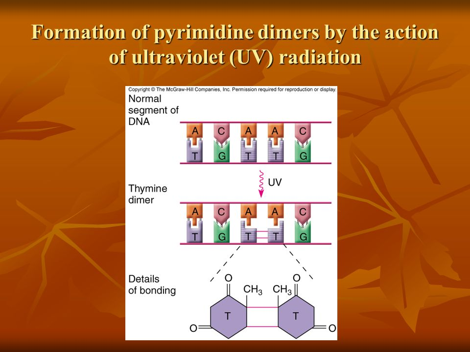 Formation of pyrimidine dimers by the action of ultraviolet (UV) radiation