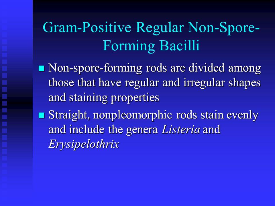 Gram-Positive Regular Non-Spore-Forming Bacilli