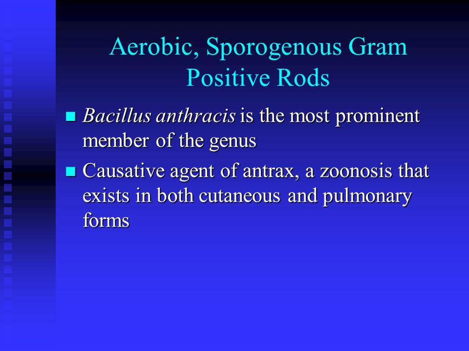 Aerobic, Sporogenous Gram Positive Rods