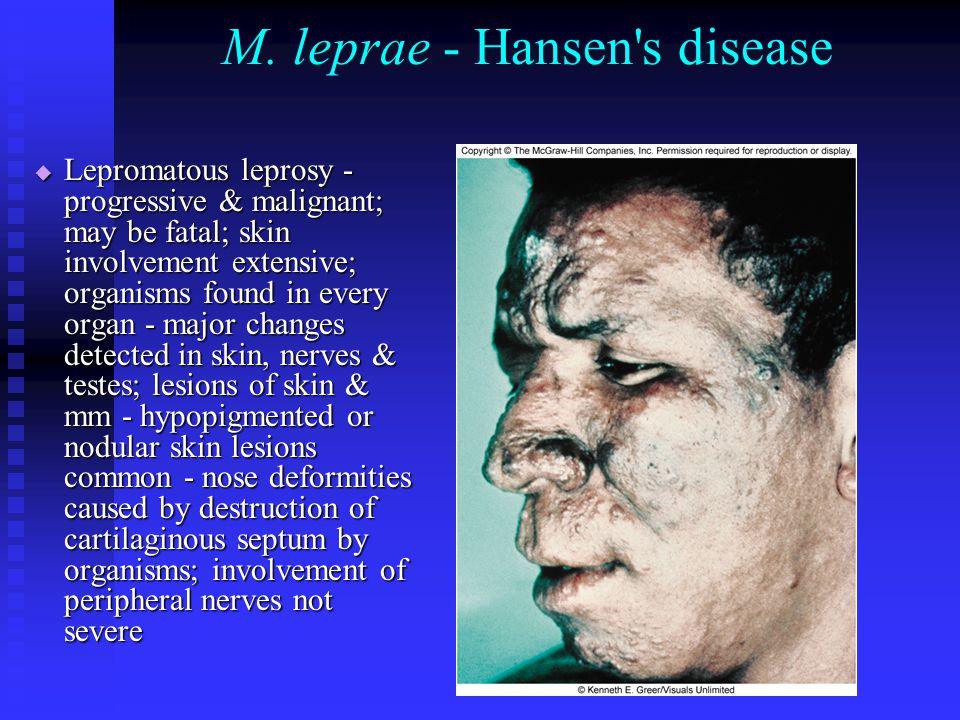 M. leprae - Hansen s disease