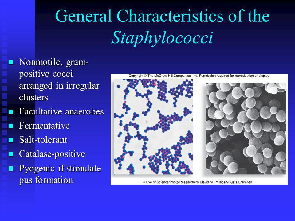 General Characteristics of the Staphylococci