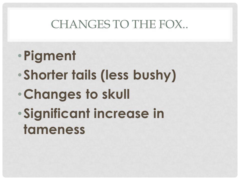 Shorter tails (less bushy) Changes to skull